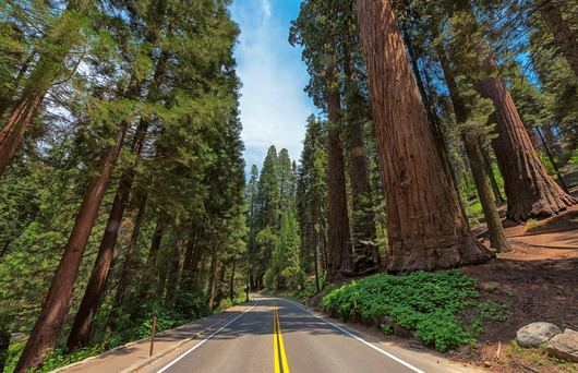Avenue of the Giants: The Redwoods Road Trip You Need to Take