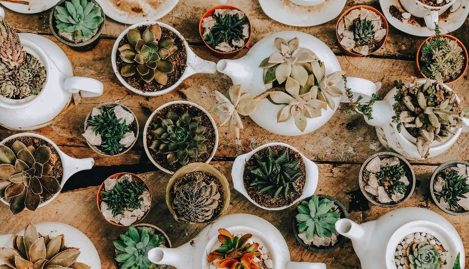 Together Fern-Ever: The Bay Area Plant Shops We Love