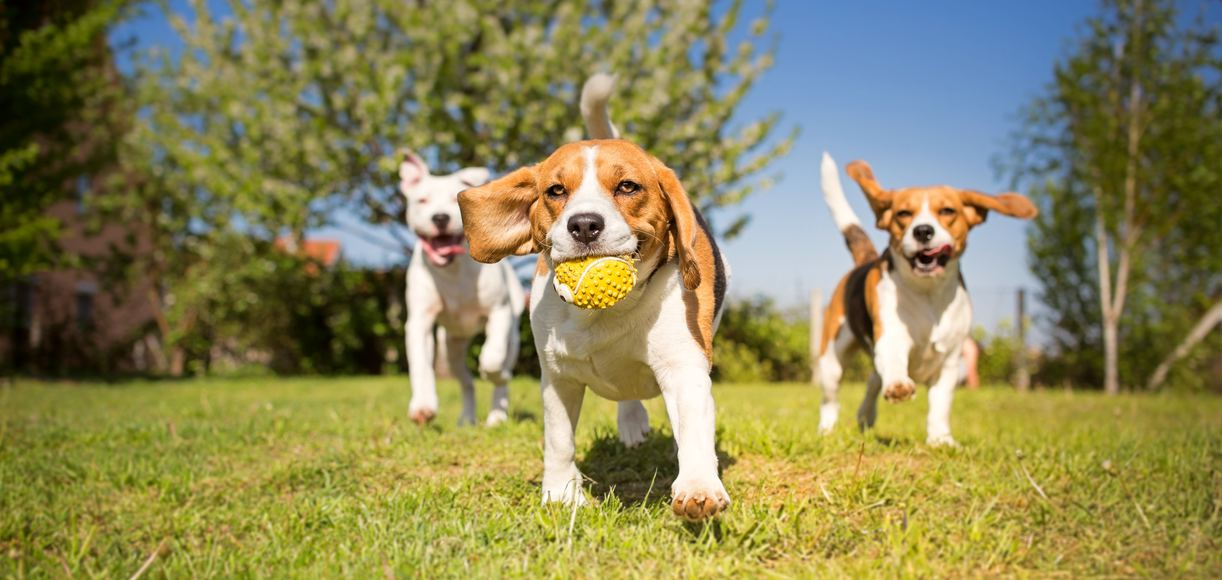 The 5 Best Dog Parks in Contra Costa County