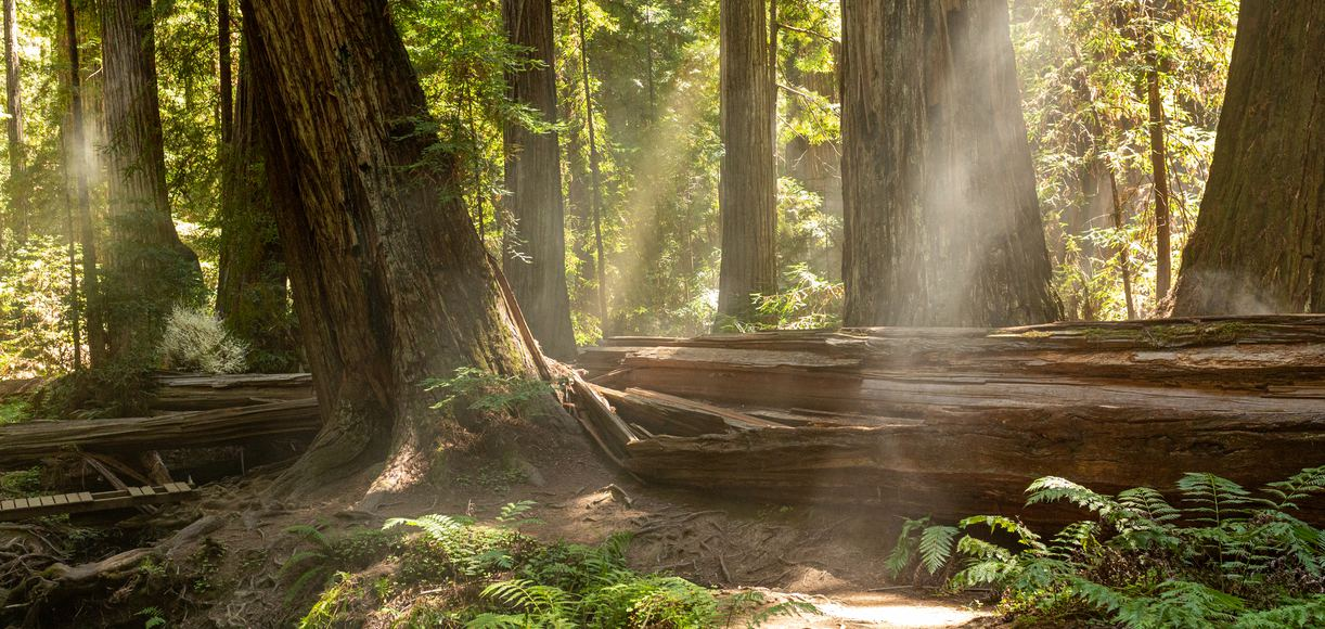 These Are The Best Forests in California