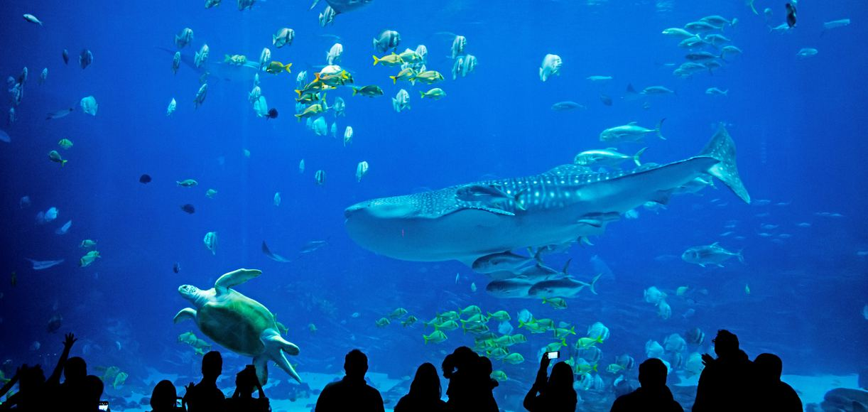 The 5 Best California Aquariums for Kids and Adults