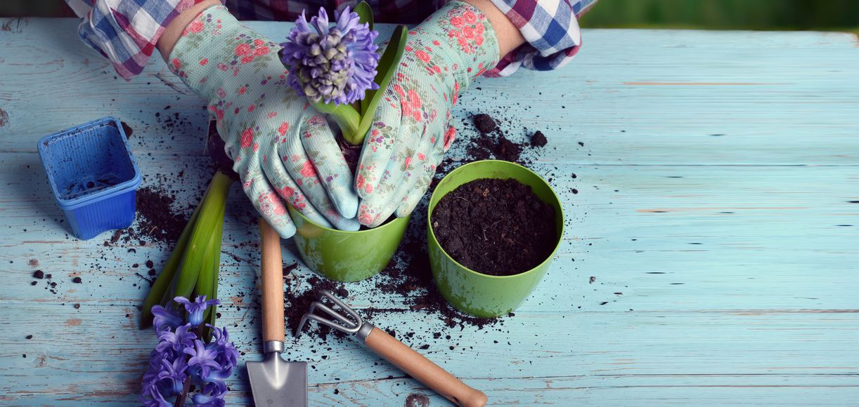 California Soils: What to Plant in Each Golden State Soil Type