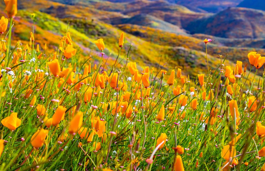 Where to See California's Spring Flowers in Every Region