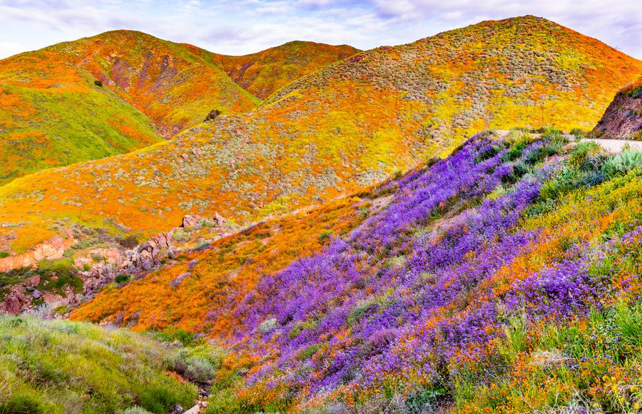 Where to See California's Super Blooms