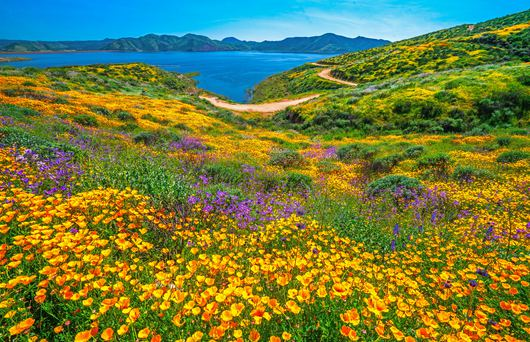 The Most Beautiful Places to See California Wildflowers