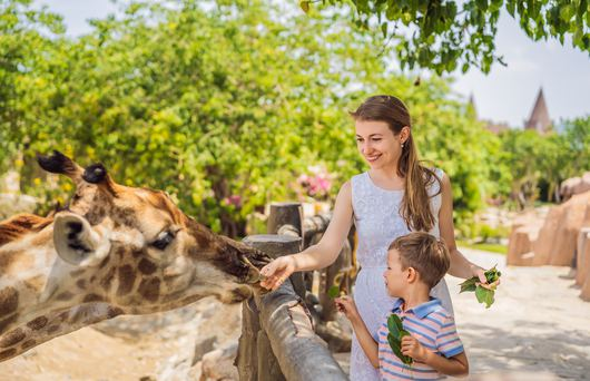 24 Questions about California's Zoos, Answered