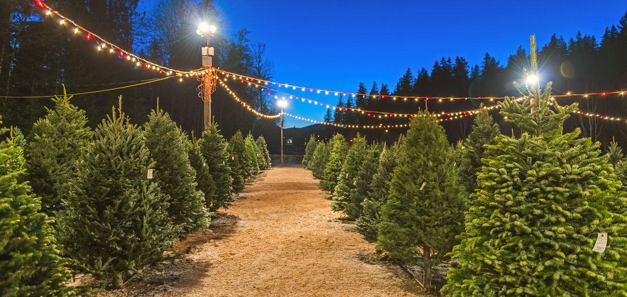 Great Christmas Tree Lots Near Los Angeles