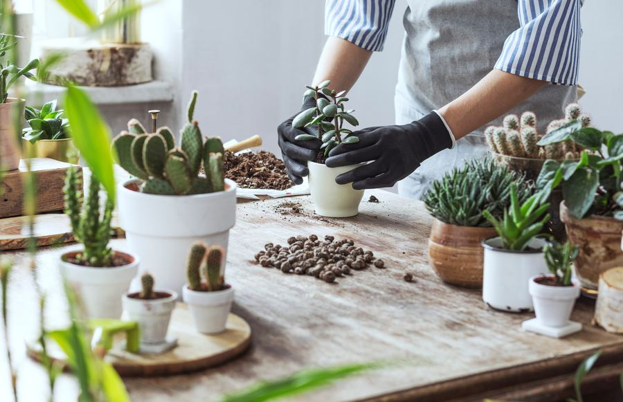 How to Create the DIY Succulent Gardens of Your Dreams