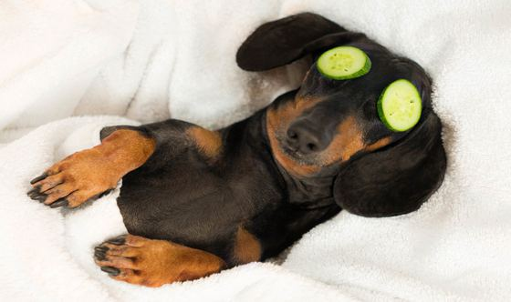 9 Pawesome California Pet Spas to Spoil Your Pup on National Dog Day