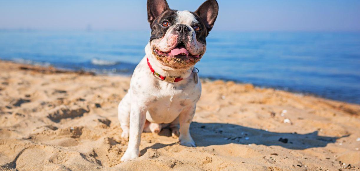 San Diego's 7 Best Dog Beaches