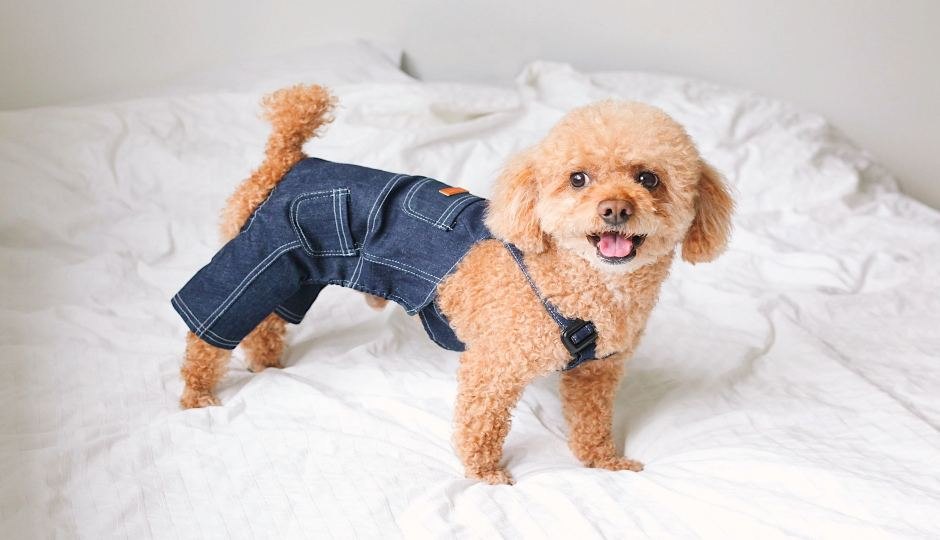 Not Your Average Dog Mom: The Best Dog Boutiques for Spoiling Your Fur Baby