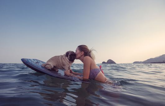 The Best Dog-Friendly Beaches in Southern California