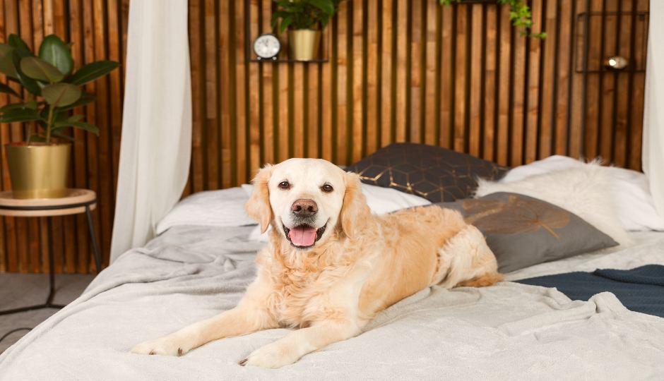 Fun With Fido: 5 Dog-Friendly Hotels in San Diego