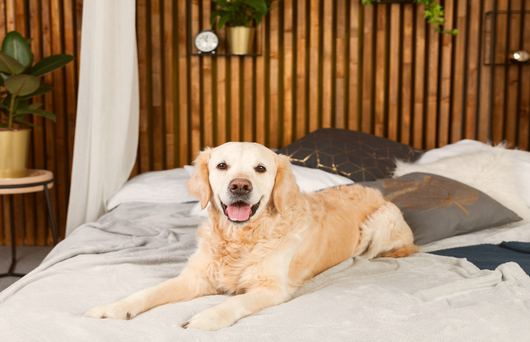 Fun With Fido: 5 Dog-Friendly Hotels in San Diego