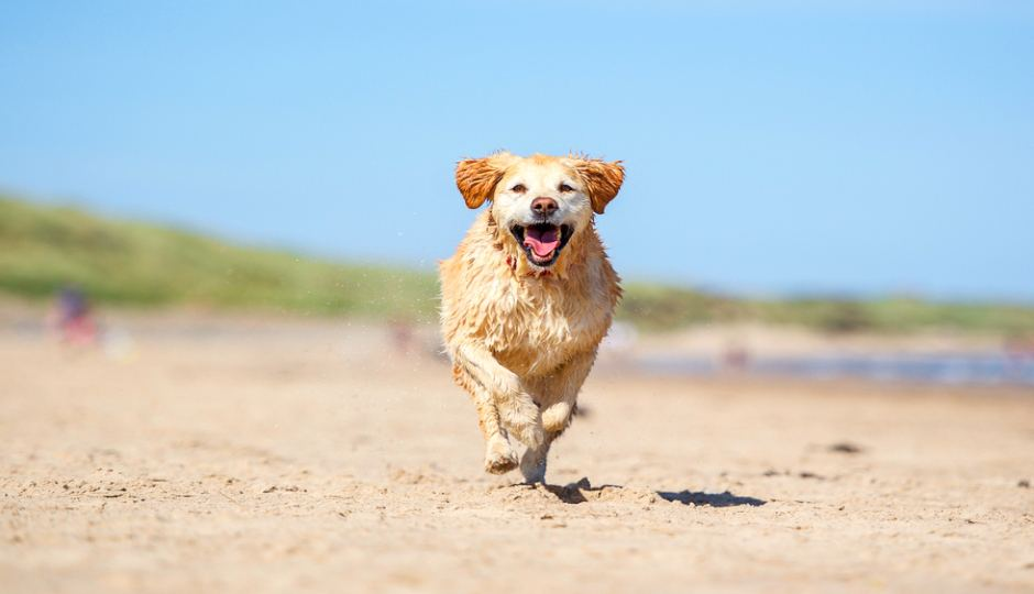 Fun With Fido: The Best Dog-Friendly Beaches in California