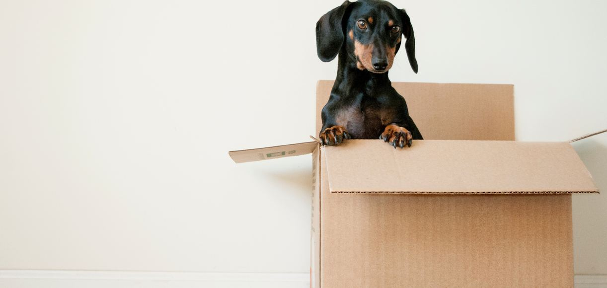5 Stress-Free Tips for Moving in California During a Pandemic