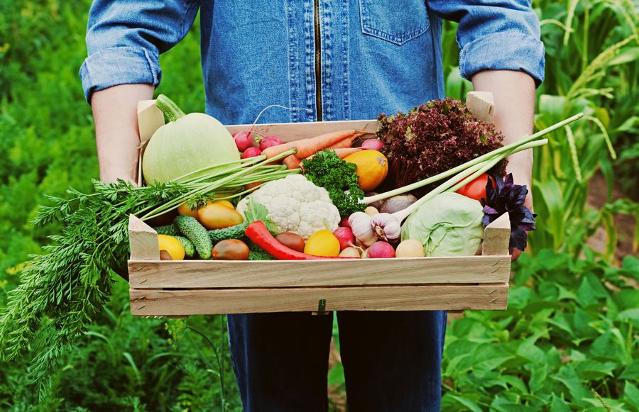 The Fall Vegetables And Fruits We Can't Get Enough Of