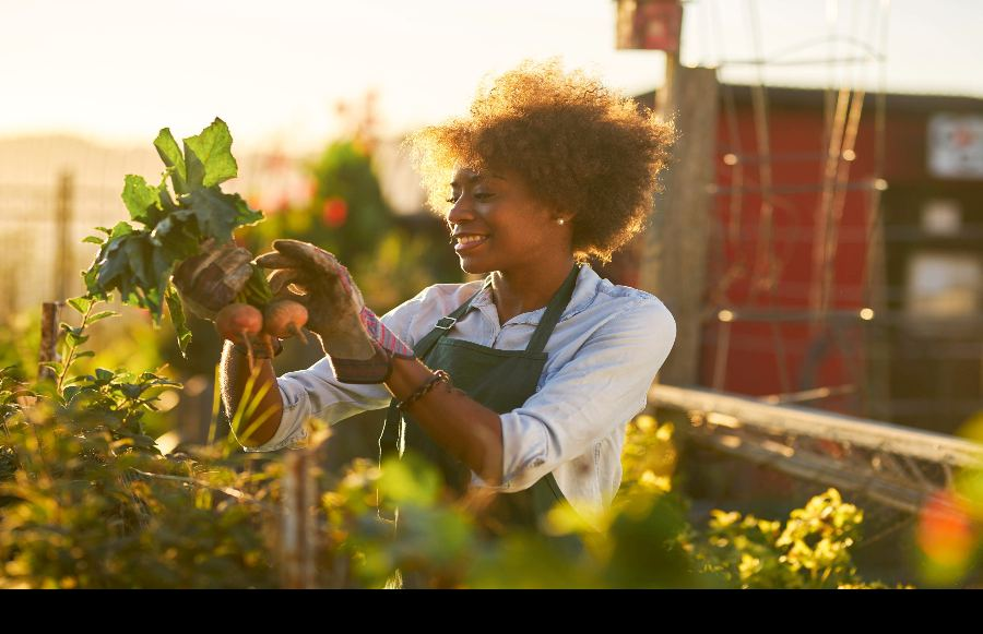 The People's Produce: A Guide to California's Community Gardens