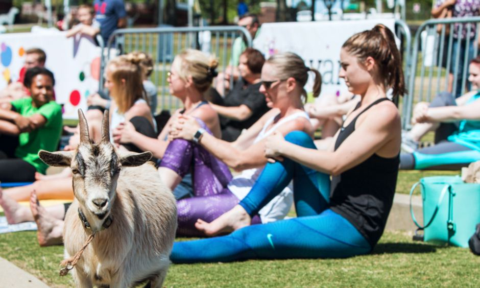 Goat Yoga is Officially a Thing, and It's Here to Namaste