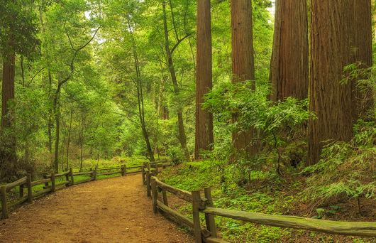 The Ultimate Guide to Henry Cowell Redwoods State Park