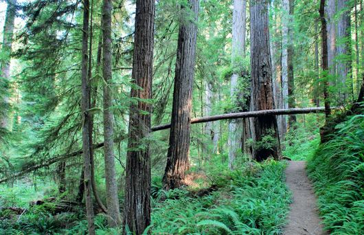 From Cheese to Trees, Humboldt Has It All