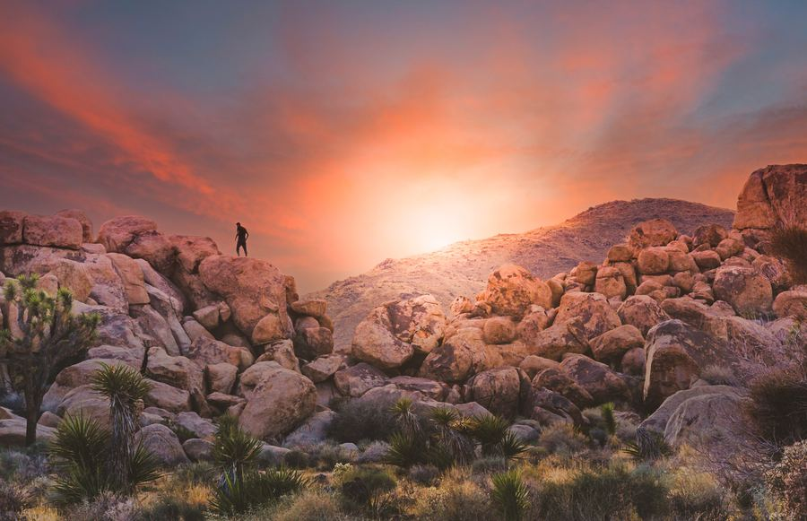 A Guide to The Best Hikes in Joshua Tree