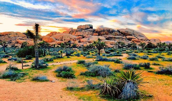 Getaway Guide: Joshua Tree - Part 2