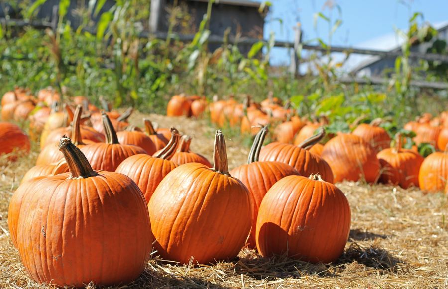 Los Angeles Pumpkin Patches You Don't Want To Miss