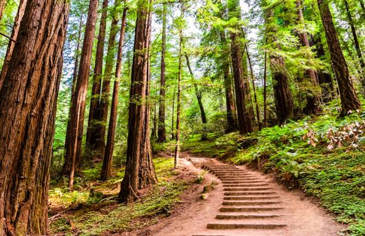Traversing Trails: What to See and Do in Muir Woods National Monument