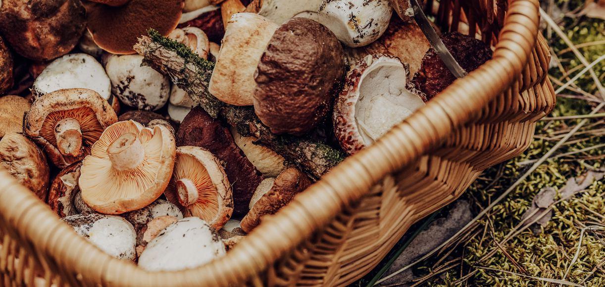 Mushroom Madness: Where to Savor California's Wild Mushrooms This Month