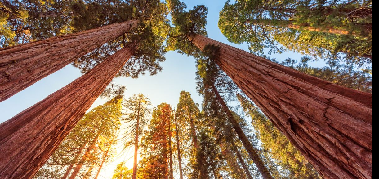 A Guide to Sequoia and Kings Canyon National Parks