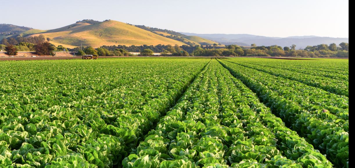 Can't-Miss Central Valley Farms