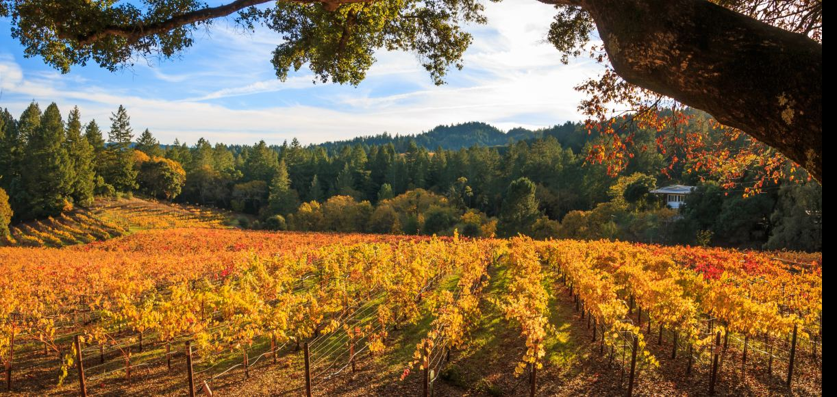 The Golden State's Best Places to Visit in The Fall