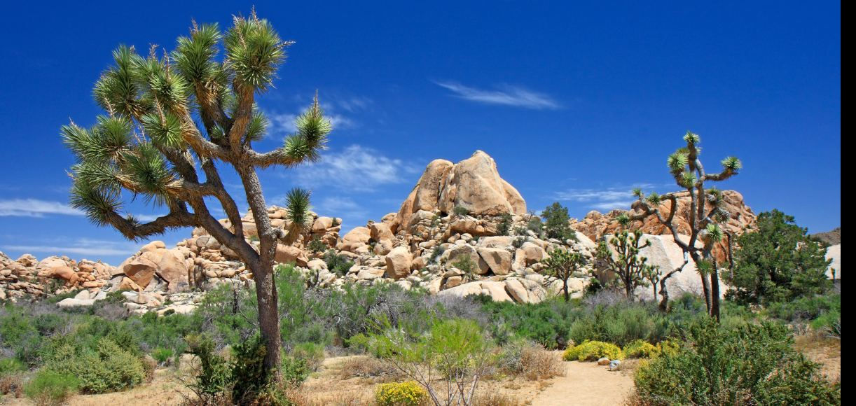 The Golden State Desert Parks That'll Leave A Lasting Impression
