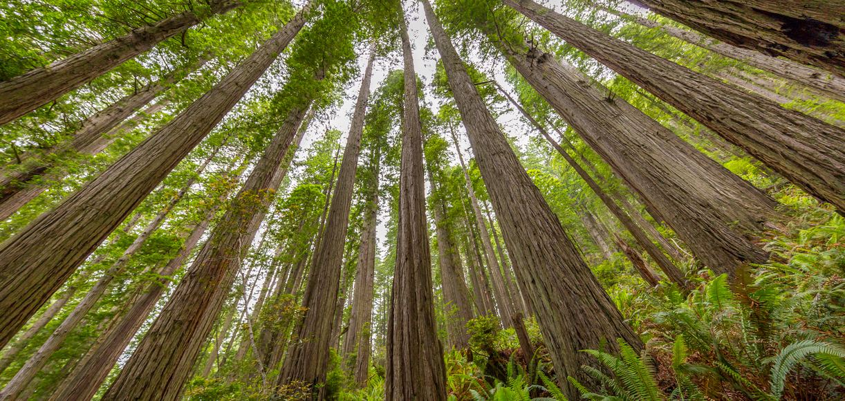 The Ultimate Guide to Redwood National Park