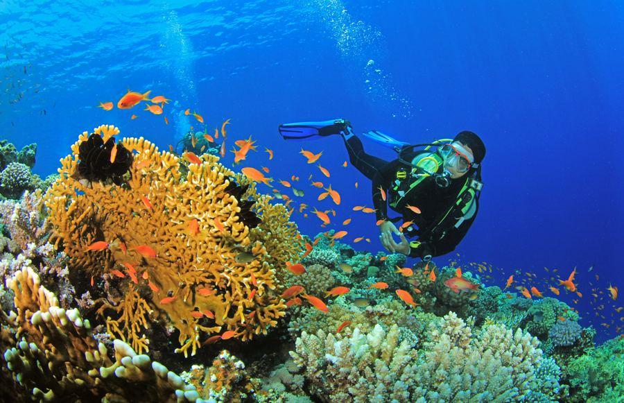 Under the Sea: The Best Scuba Diving Destinations in California