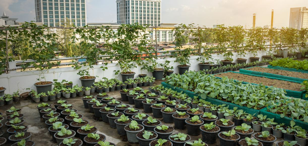 Notable Urban Agriculture In The Golden State