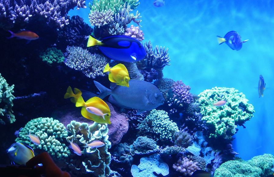 Must-See Zoos and Aquariums in the San Francisco Bay Area