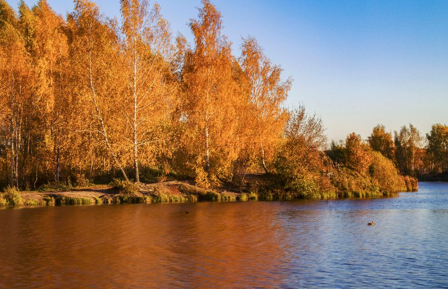 Where to See Stunning Fall Foliage in Southern California