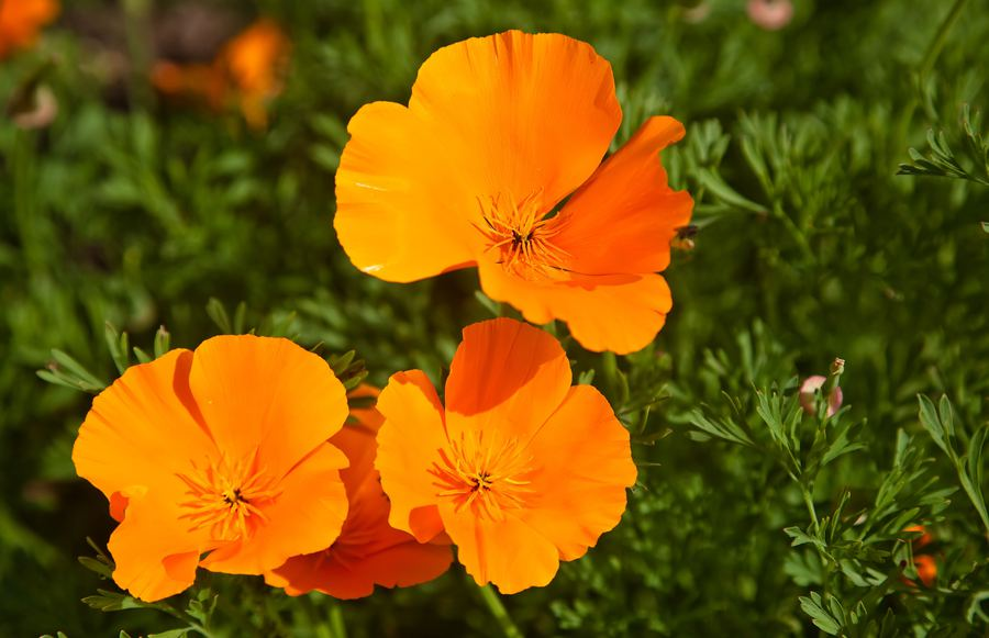 The Ideal Plants To Grow in Fall