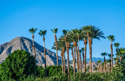 The Best Desert Camping Spots In The Golden State