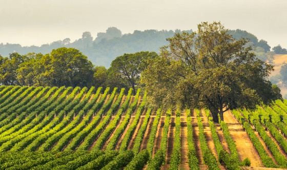 Sonoma's Secrets: Soil and Sun