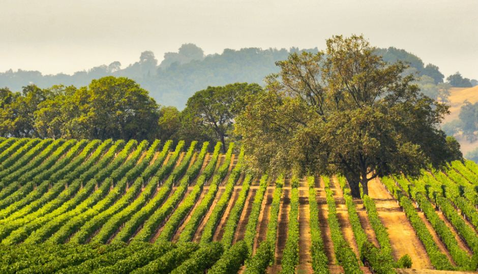 Sonoma's Secrets: Soil and Sun