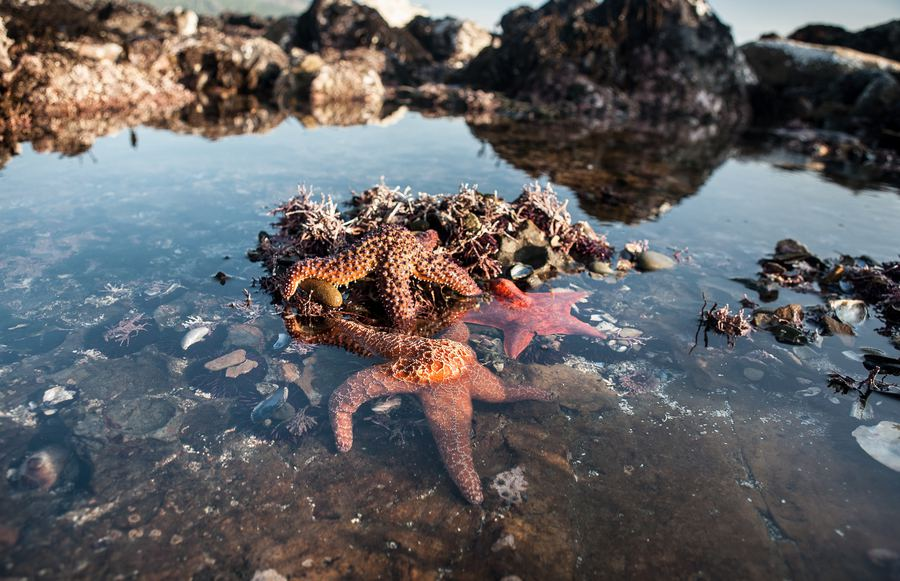 Tide Pools in Northern California You Need to See