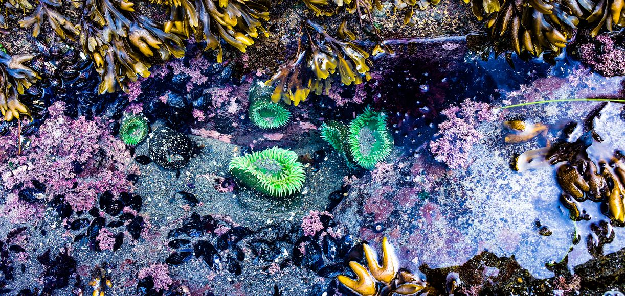 The Best Tide Pools in San Francisco