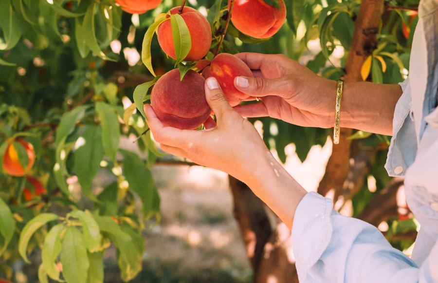 The Best U-Pick Farms in California