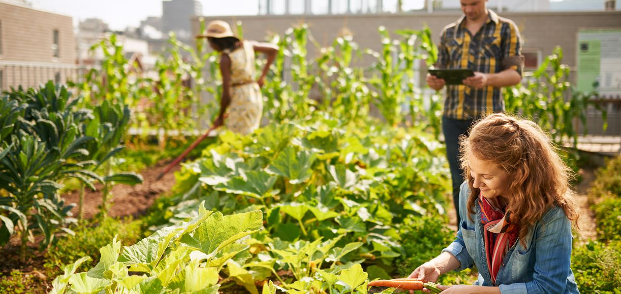 Everything You Need To Know About Urban Farming in San Francisco