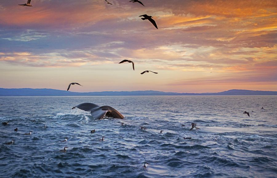 11 Incredible Places for Whale Watching in California