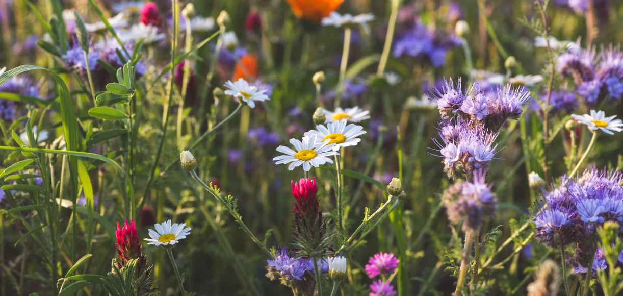 11 Wildflower Hikes to Take in California