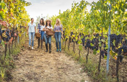 The Ultimate Golden State Wine Country Trip